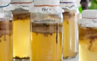 Чайный гриб при лечении молочницы